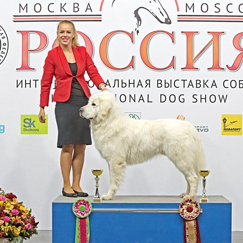 bullmastiff-ru@yandex.ru